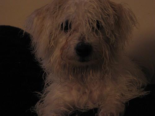 Rainy day Stanley.