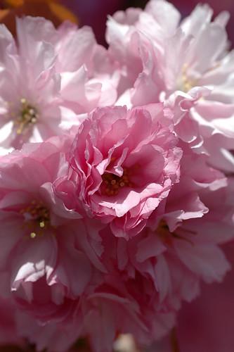 Yard flowers 3