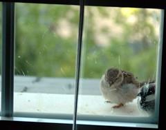 Los pájaros 03