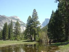 Yosemite - Marsh