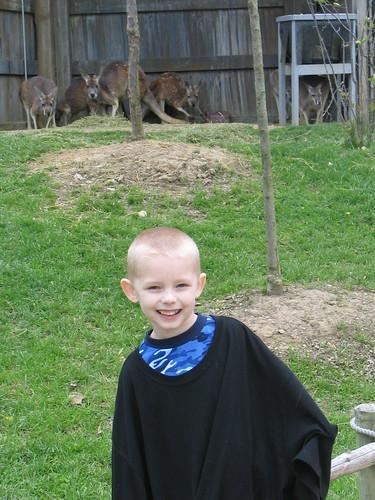 colton and the kangaroos