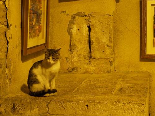 cat 3/248