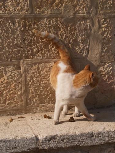 cat 7/248