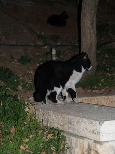 cat 32/248
