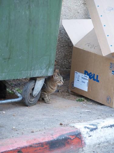 cat 45/248