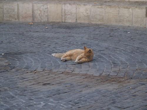 cat 71/248