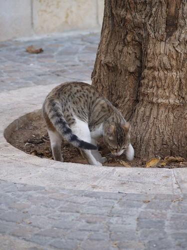 cat 84/248