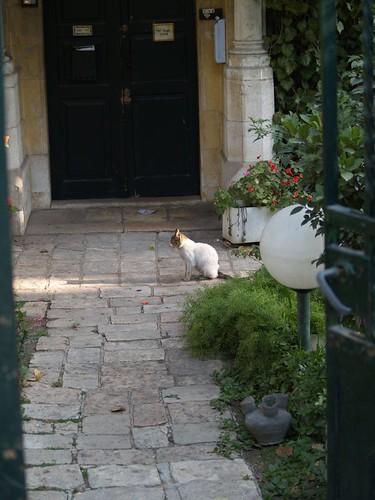 cat 126/248
