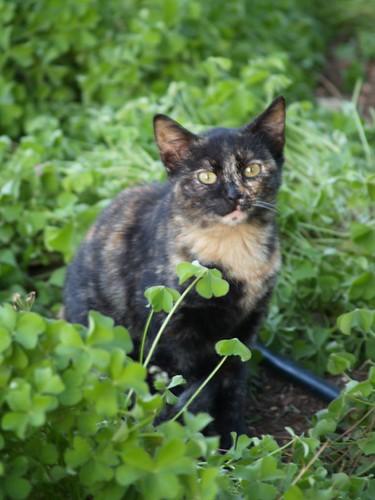cat 137/248