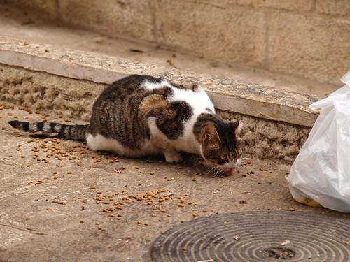 cat 181/248