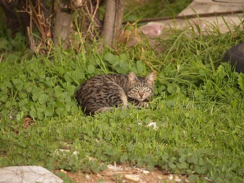 cat 211/248