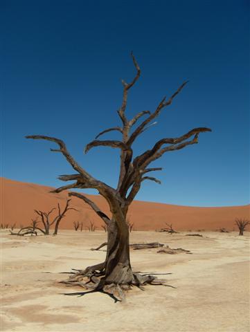 Dead vlei tree desert namibia