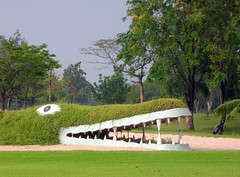 Crocodile in the golf course