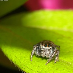 Jumping! spider