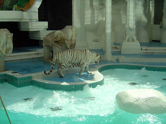 Mirage - White Tiger I