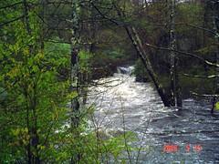 Isinglass River