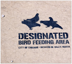 Designated Bird Feeding Area