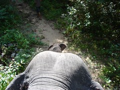 View from a Mother Elephant 2