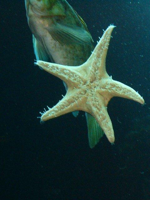 Starfish and fish
