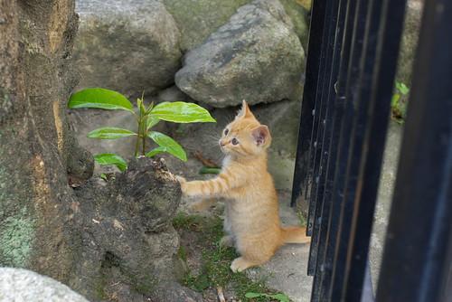 仔猫が立った、仔猫が立ったよ!