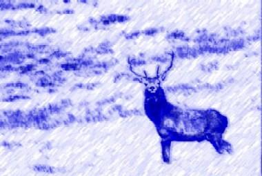 rain_deer_result