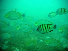 Fishes at Koh Phai Island, Thailand