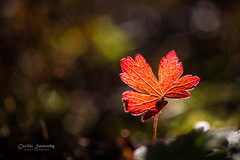 Autumn light photo by nemi1968