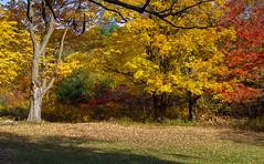 Autumn Colors at Mont St-Bruno Park. #1 photo by Danny VB