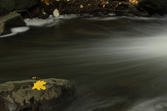 First Yellow Leaf photo by Dex Horton Photography (Dos Con Mambo)