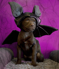Happy Halloween from Rosemary the Bat photo by Immature Animals
