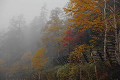 the color of fall photo by wang_xiao