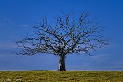 Tree photo by JSP92