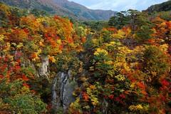 贅沢  Luxurious  ~宮城,鳴子峽 Naruko Gorge ~ photo by PS兔~兔兔兔~