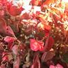 31079258066_493daa05e2_t