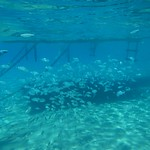 Lots of fish today<br/>17 Aug 2015