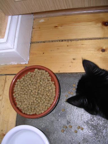 Katt4liten