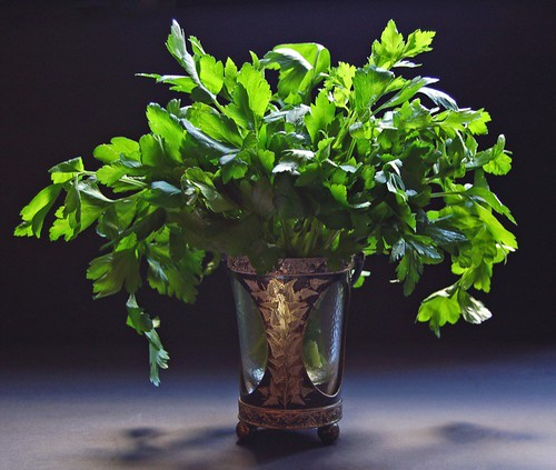 parsley bouquet© by haalo