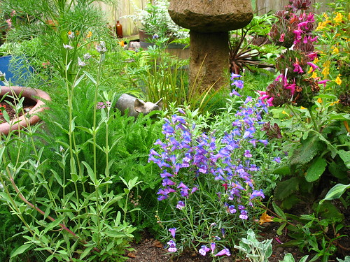 Penstemon and piggy