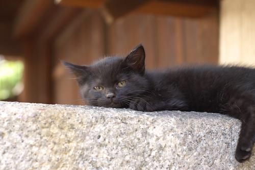 残された仔猫