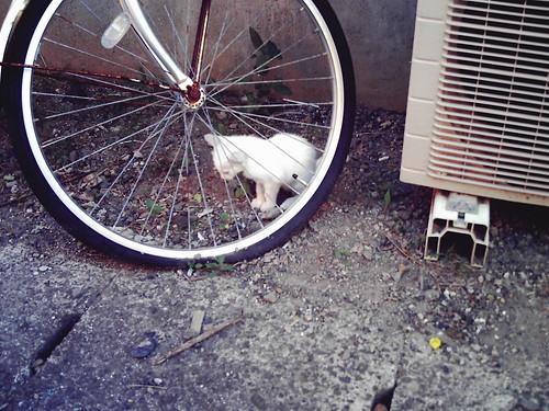 too shy kitty / びくびくしてる子猫