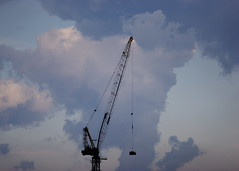 A Crane Grows in Brooklyn
