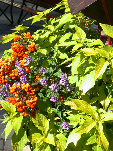 ハンギングバスケットの花@Butchart Gardens
