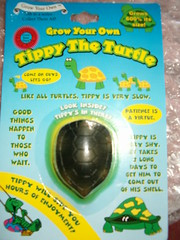 Tippy the Turtle