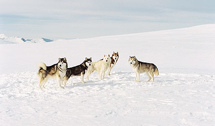 eightbelow_11