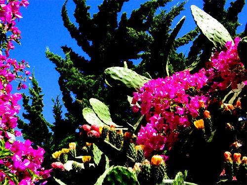 lush cacti
