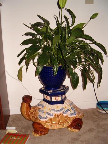 Turtle Plant Holder!