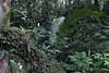 Maison de la forêt Petite boucle très sympa à travers la forêt tropicale, pas de difficulté si ce n'est qu'en cas de pluie le chemin est très glissant.  Curiosités du parcours : Sentier pédagogique avec de nombreux panneaux indiquant les différentes espèc