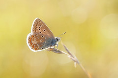 Interesting photos - 29 Aug 2015 - Flickr
