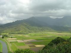 Kauai Farming