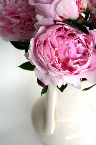 Sarah Bernhardt Peony Rose, thanks to littlesomethings.blogspot.com
